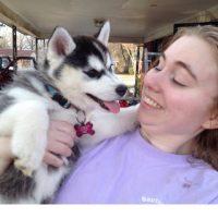 Regalo cachorros husky para adopcion